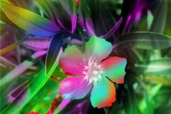 Rainbow Cayman Blooms-Lauri Bridgeforth